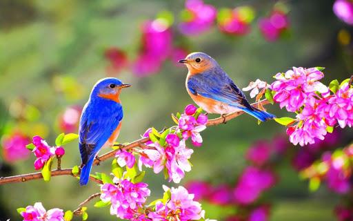 Những bài thơ hay về Mùa Xuân 6